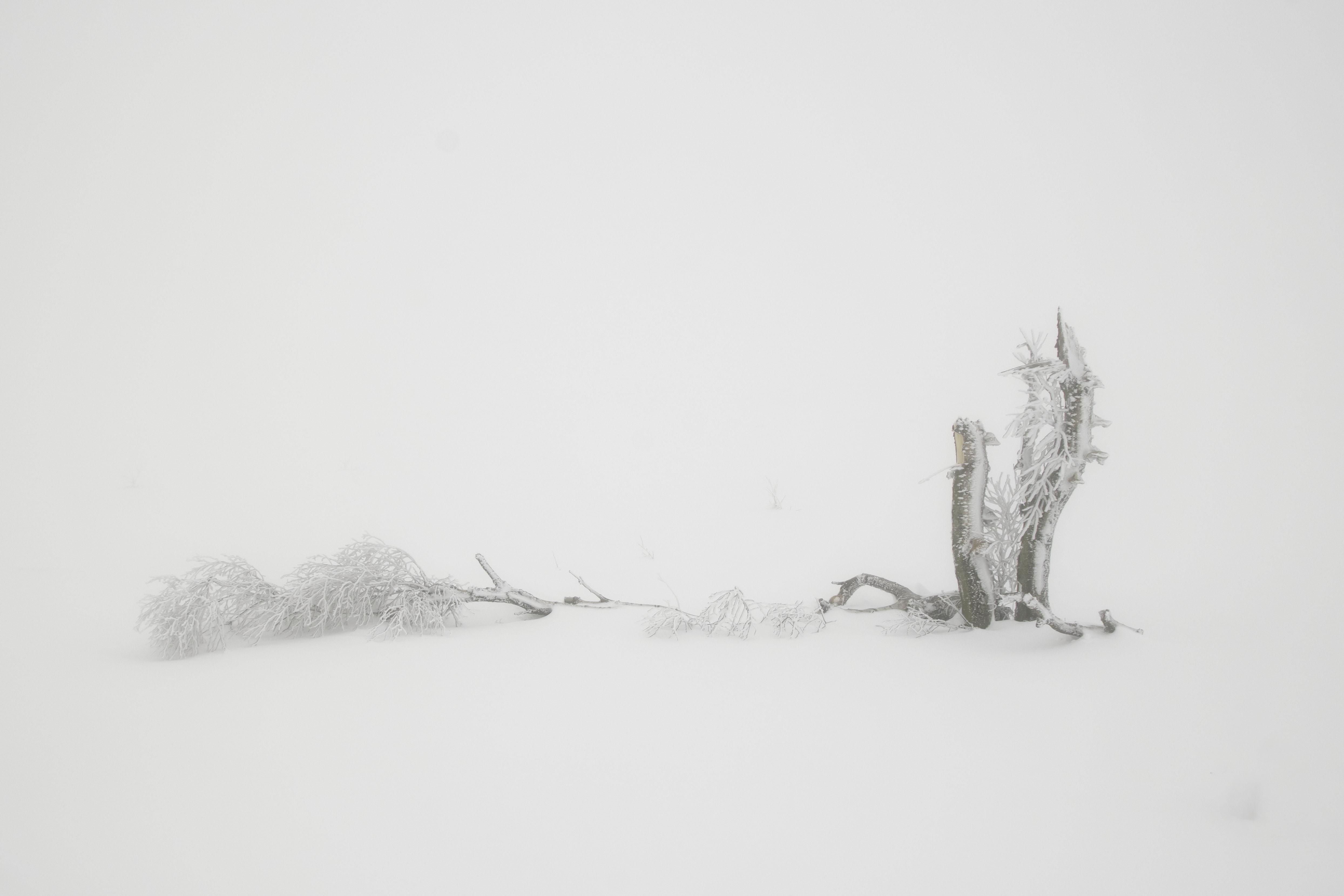 Karen Simal_sneeuwboompje_1