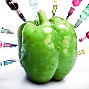 Los OGM (GMOs)