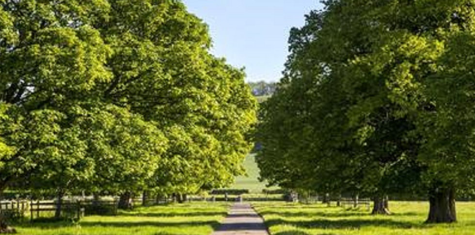 Triskele Trees (1).jpg