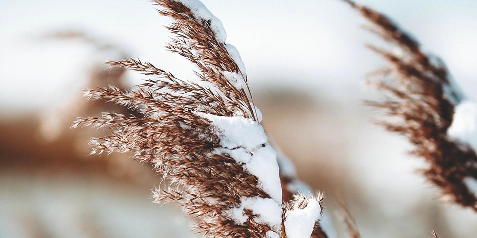 Winter Revival Meeting
