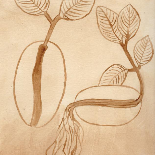 seeds-minerva.jpg