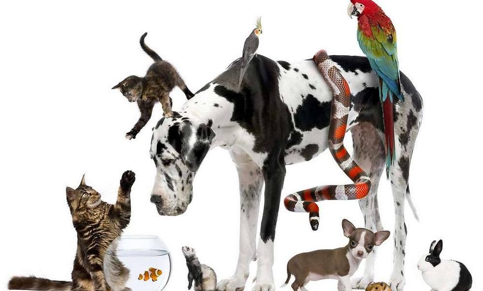 Diplom Tierheilpraktiker