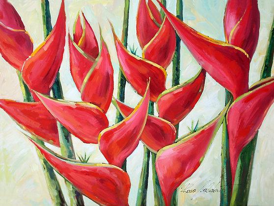 Helliconias