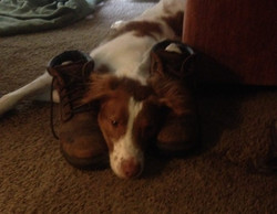 Lucky Me Doggie Daycare Ocala Photos