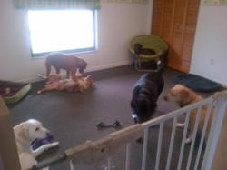 Lucky Me Doggie Daycare Ocala
