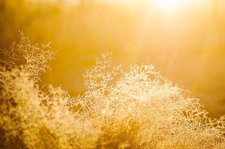 golden-abstract-blur-bright-545313.jpg