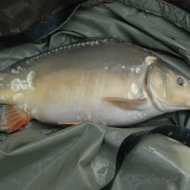 Baby Fish at 4lb in 2009