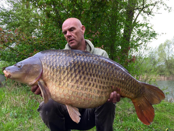 The small common.jpg