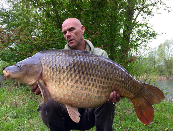 The small common