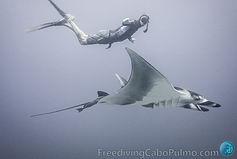 FreedivingCaboPulmo-4457.jpg