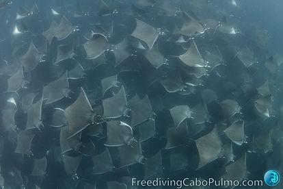 FreedivingCaboPulmo-12392.jpg