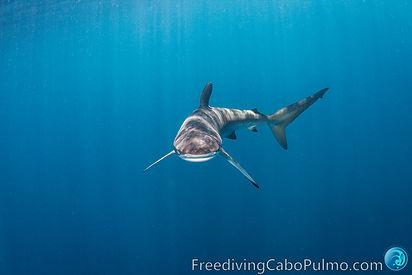 FreedivingCaboPulmo-8376.jpg