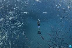 FreedivingCaboPulmo-6129.jpg
