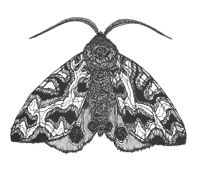 1_hm_moth #1