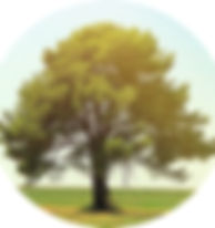 树.jpg