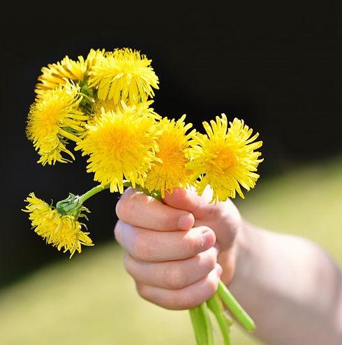 dandelion_flowers_wildflowers_yellow_bou