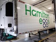 Hamilton Eggs Lettering