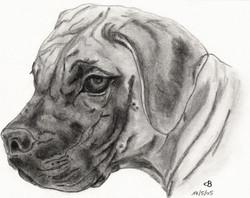 4.Ban-pup