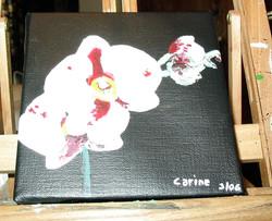 15.orchidee 1