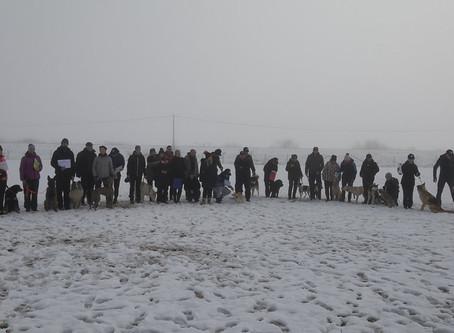 Izpiti šolanih psov