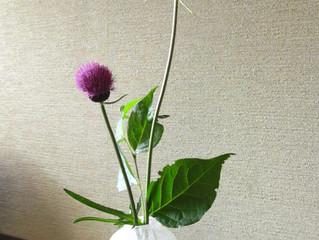 季節の草花 6月