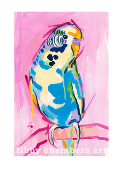 LC Budgie FB