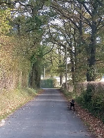 Quiet country lane approaching Crab Apple Cottage.