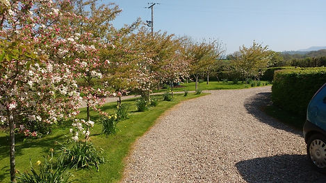 Driveway to Crab Apple Cottage with May blossom