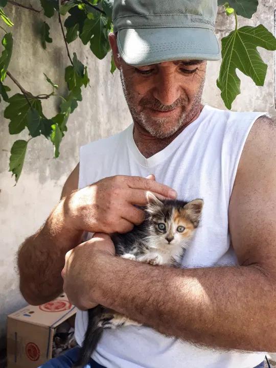 One Pampered Kitten