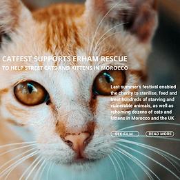 CatFest Link