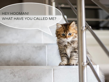 What's in a cat's name?