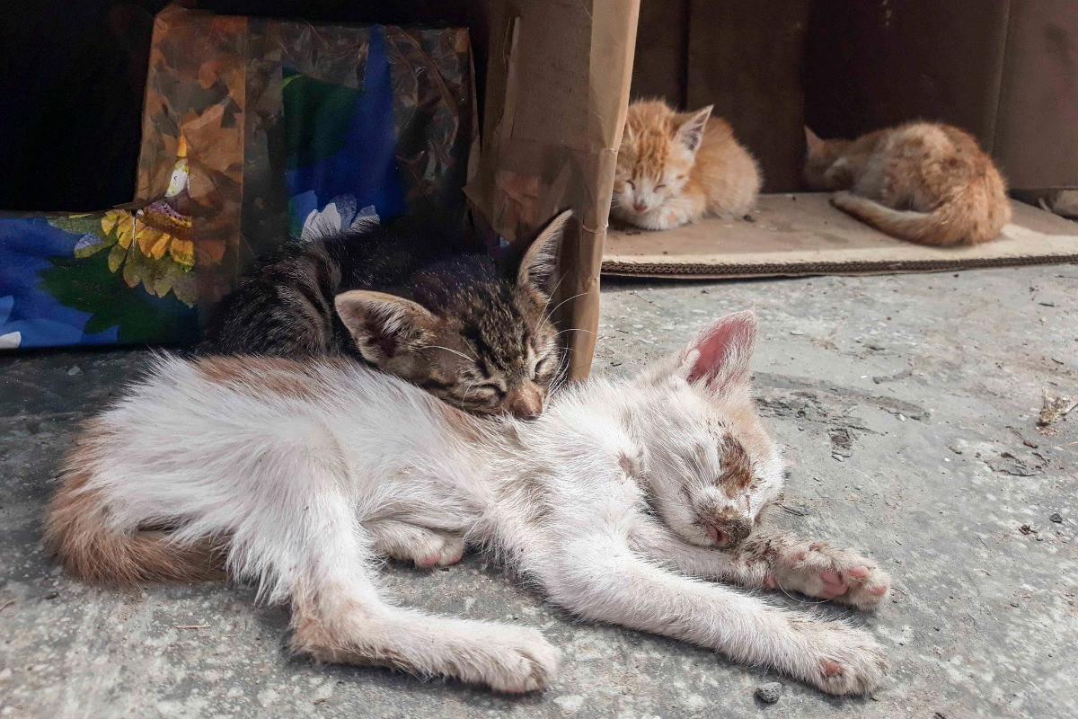Sick kittens are dumped with well ones
