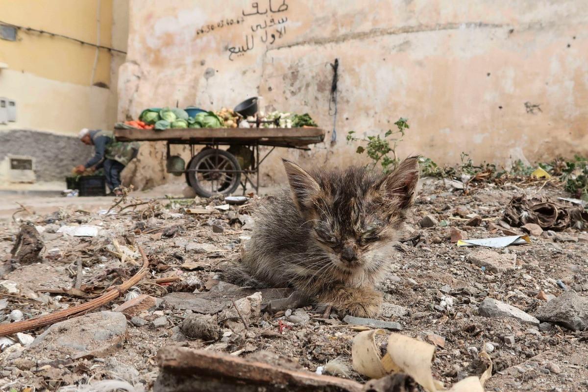 Kitten at the dump site