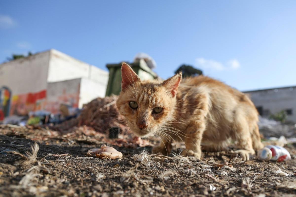 Cat onsite at the dump