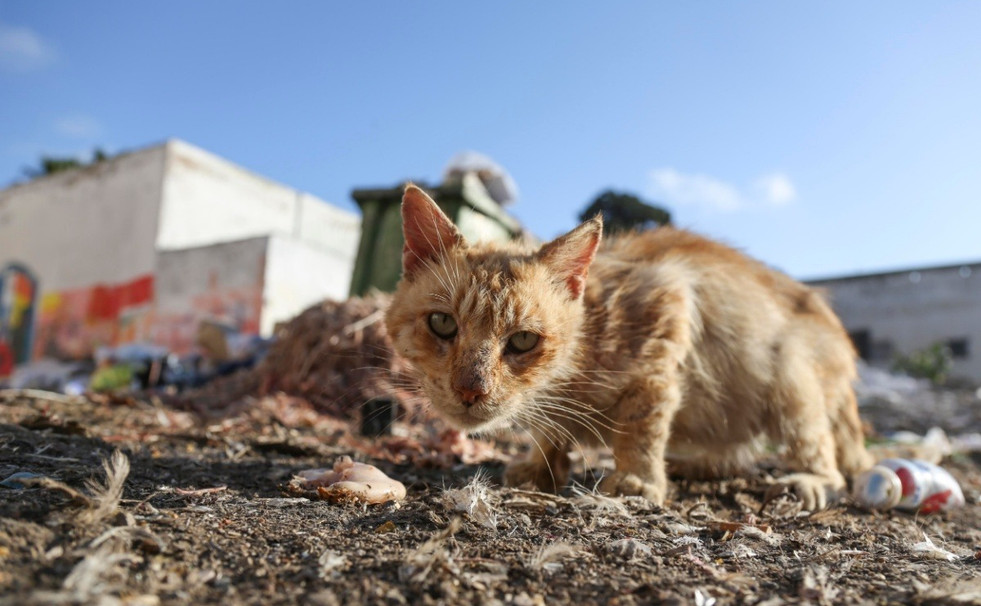 Cat onsite at the dump
