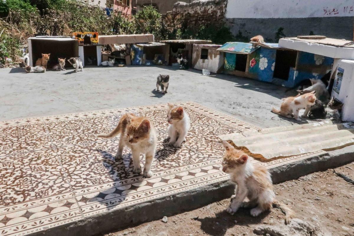 Kitten City