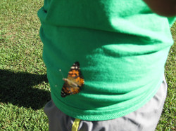 Our Butterfly