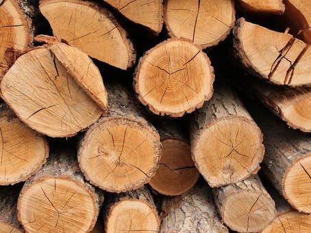 Dosier: las mafias rumanas de la madera