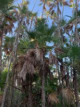 Everglades Boardwalk.jpg