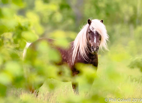 Pony In The Shurbbery