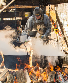BOILING THE SAP