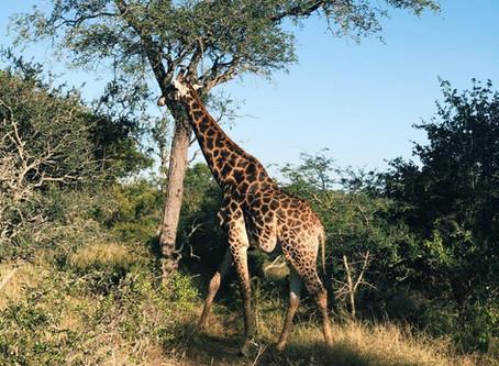 Kruger National Park - South Africa