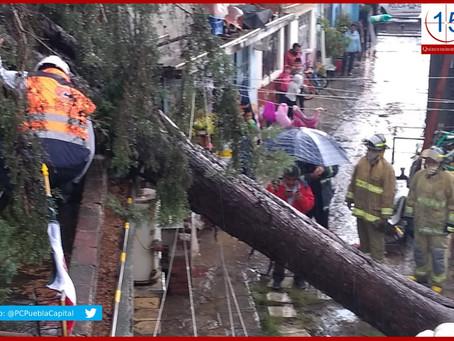 Inundaciones, autos varados y caídas de árboles, saldo de fuerte lluvia en Puebla
