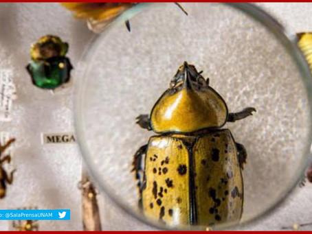 Abismal, el desconocimiento de insectos y su extinción