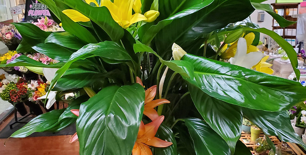 Large Floor Plant with Fresh Flowers