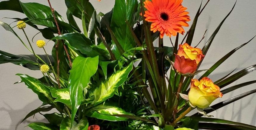 Medium Dishgarden with fresh flowers.