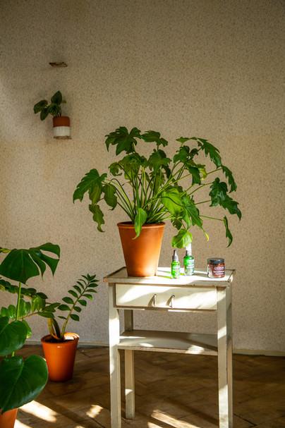 plantárium | Pokojové květiny