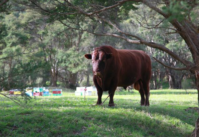 Meander Through Farmland