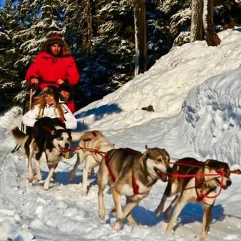 Dogsledding 9am-12pm Sunday