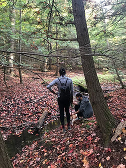 ForestForagingWhitneyFrenchDurhamArtGall
